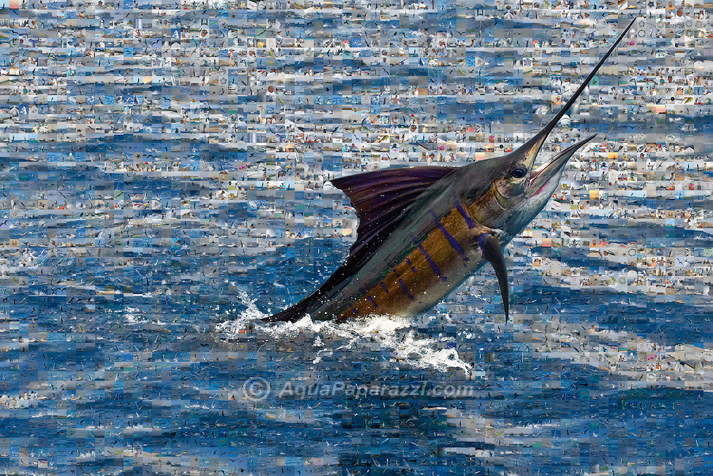 Jumping Pacific Sailfish in a sea of Mosaic tiles.