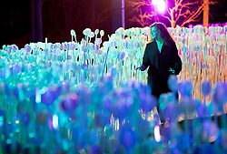© Licensed to London News Pictures. 17/01/2018. London, UK. A visitor enjoys walking through a field of illuminated flowers called 'Entre Les Ranges' by Rami Bebawi / KANVA in King's Cross during the Lumiere London festival. Running from 18th-21st January 2018 more than 50 artworks are transforming the capital's streets, buildings and public spaces into an immersive nocturnal art exhibition of light and sound. Locations include King's Cross, Fitzrovia, Mayfair, West End, Trafalgar Square, Westminster, Victoria, South Bank and Waterloo. Photo credit: Peter Macdiarmid/LNP
