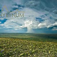 thunder head, anvil cloud, drops rain in mushroom cloud,