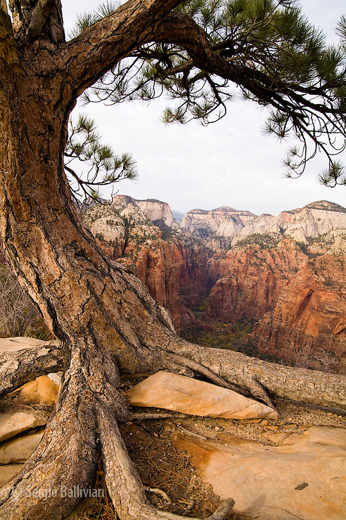 The view from Angel's Landing buttress is one of the most popular hikes in the region - for those that are not scared of heights - in Zion National Park near Springdale, Utah.