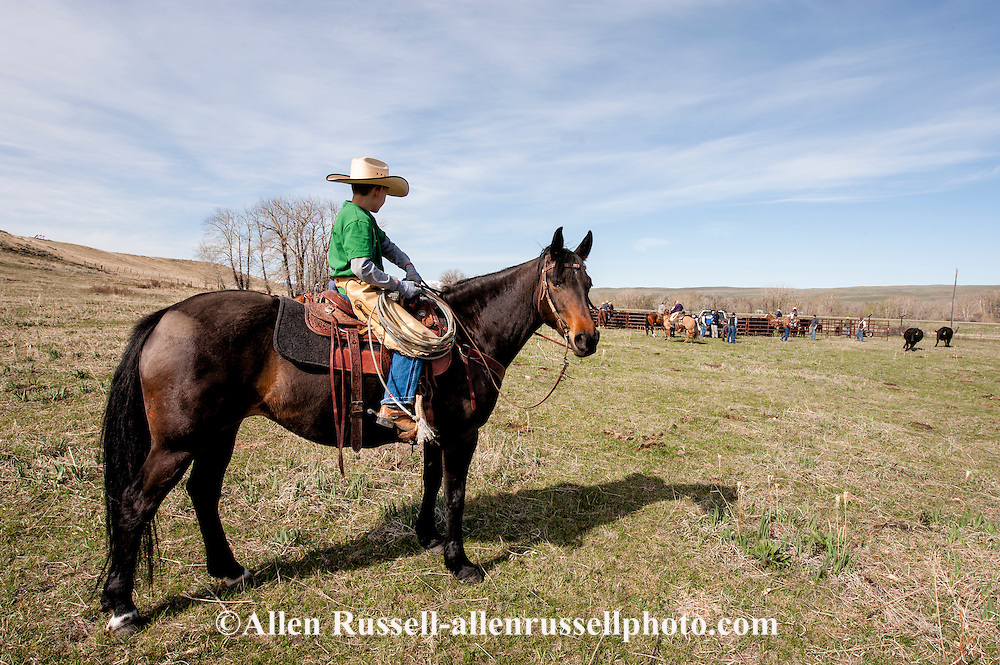 Cowboy, kids, quarterhorse, Lazy SR Ranch, branding, Wilsall, Montana, Rodie Keyes