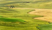 Wheat Fields, Palouse, WA