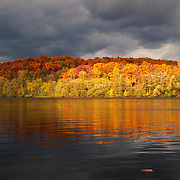 """Floating Oak Leaf""<br />