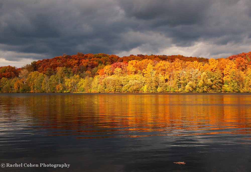 &quot;Floating Oak Leaf&quot;<br /> <br /> A lone fallen oak leaf floats on the water as storm clouds pass overhead. Sunlight shines brightly on the peak fall foliage casting colorful reflections on the water!!<br /> <br /> Autumn Landscapes by Rachel Cohen