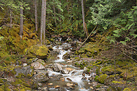 Pyramid Creek, Ross Lake National Recreation Area, North Cascades Washington