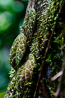 Leaves for other jungle plants and moss make themselves at home on trees throughout the rainforests of Borneo.