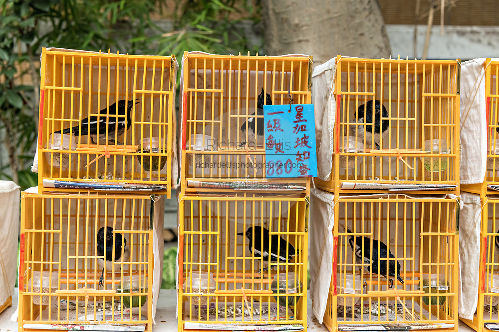 Chinese songbirds in traditional bamboo cages on sale at the Yuen Po Street Bird Garden in Mong Kok, Kowloon, Hong Kong.