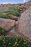A small stream trickling through the flowers near the top of Pikes Peak. Colorado Springs, Colorado