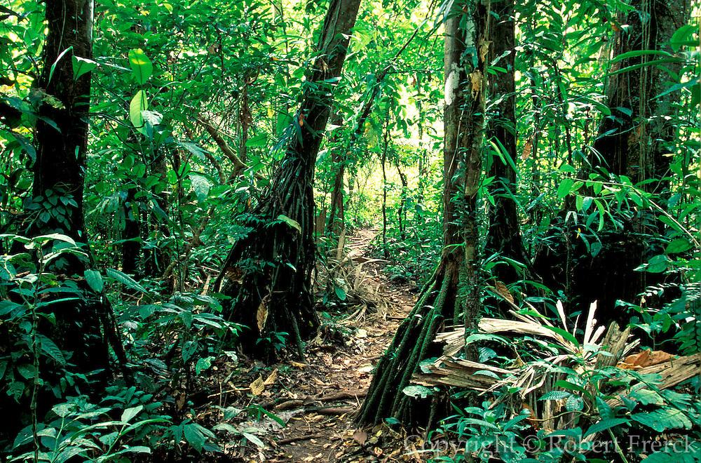 ECUADOR, AMAZON BASIN Napo River; path through rainforest