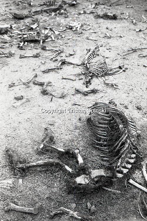 Animal boneyard, Okeechobee, Florida, 2012.
