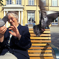 Europe, Norway. (MR) Irena Pedasham feeds bread to pigeons in downtown Trondheim.