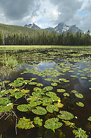 Lily Pads on small lake McGown Peak in the distance, Sawtooth Mountains, Idaho