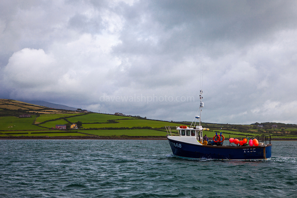Fishing boat An Portán Óir.  Dingle Bay, Kerry, Ireland