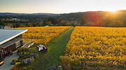 BRilliant fall colors at Raptor Ridge, Willamette Valley, Oregon