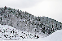 Snowy Willamette National Forest in the Cascade mountain range in Oregon