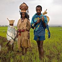 Le Nil convoité, un fleuve entre développement et conflit