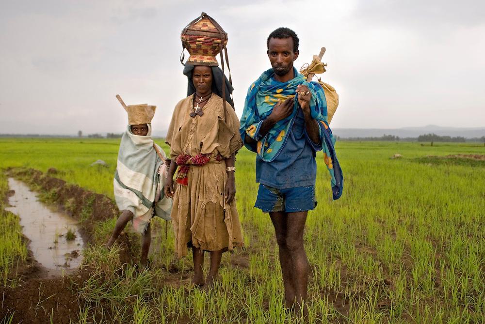 """Pendant la saison des pluies, les terres qui bordent le Lac Tana sont inondées. Avec l'aide des Nord-coréens, le ministère de l'agriculture introduit la culture du riz en 1978 afin de profiter astucieusement de cet excèdent d'eau et de tenter de remédier au dépeuplement de la région. Ces zones désertées commencent petit à petit à se repeupler. On compte aujourd'hui des centaines d'hectares de rizières. À l'est du Lac Tana, Wereta est un """"nouveau village"""" de cultivateurs nommé par la variété de riz qui a relancé l'économie locale. Éthiopie août 2011."""