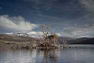 A dead tree justs from an island in Loch Assynt, north west Scotland. Photo copyright Andrew Tobin/Tobinators.com