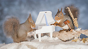"""EXCLUSIVE<br /> Photographer Pictures Squirrels With Tiny Musical Instruments Through Kitchen Window<br /> <br /> Some years ago, squirrels started to come to photographer Geert Weggen's  garden, He decided to build an outside studio from a balcony and started to shoot photos his kitchen window, Some days upto 6 squirrels visit Geert daily.<br /> <br /> This year Geert worked on an idea for a children's book, """"Squirrel Teaching You The Alphabet"""", and was confronted with some letters like an object starting with an """"X"""". That became a squirrel photo with a xylophone. From there Geert started doing a series of squirrel photos with music instruments. """"It took months to get some music instruments with the right size. I try to bring some magic, wonder and happiness with my work"""", these are real photos. Sometimes I take away a wire or some food.<br /> <br /> Photo Shows: SONG FOR YOU...red squirrels in snow with saxophone and piano  <br /> ©Geert Weggen/Exclusivepix Media"""