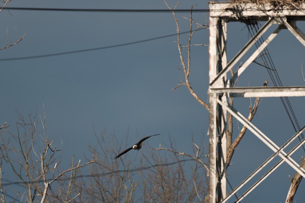 Adult retuning to nest