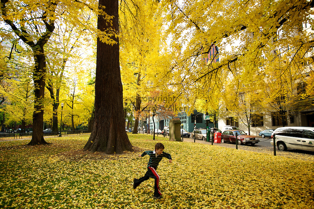 2010 November 05 - A child runs beneath the autumn Ginkgo biloba foliage at Lownsdale Square in Portland, OR, USA. CREDIT: Richard Walker