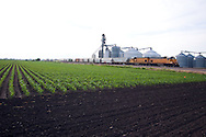 Rolling by a field of fresh soybeans, a Union Pacific freight train heads for Chicago.