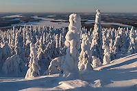 Schneefiguren in Iivaara in Lappland, Finnland