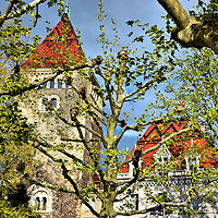 Ch&acirc;teau d&rsquo;Ouchy and Sycamore Trees in Ouchy, Switzerland<br />