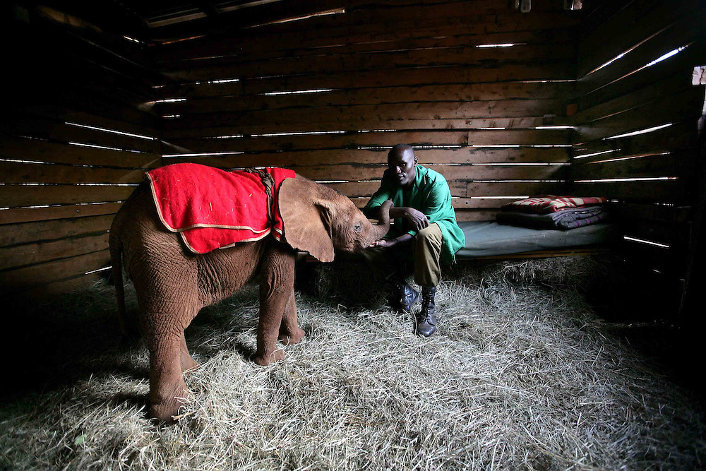 13 orphaned elephants currently live at the sanctuary. The keepers sleep with the elephants through the night.