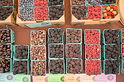 Scheeden Farm's mix of berries for sale: Kiowa, Triple Crown, Boysen, Raspberry, Navajo, Gooseberry