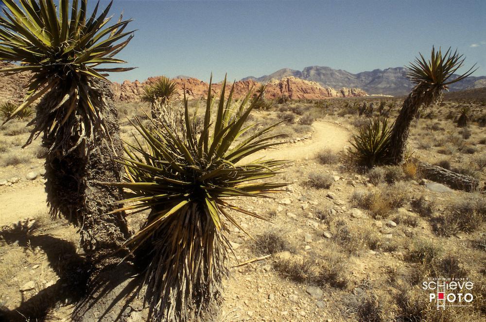 Desert nature preserve near Las Vegas, Nevada.