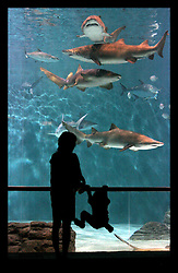 May 26th, 2006. New Orleans, Louisiana. The re-opening of the Audubon Aquarium of the Americas.  Adults and children peer through the glass at sharks and other fish at the aquarium's main exhibits.