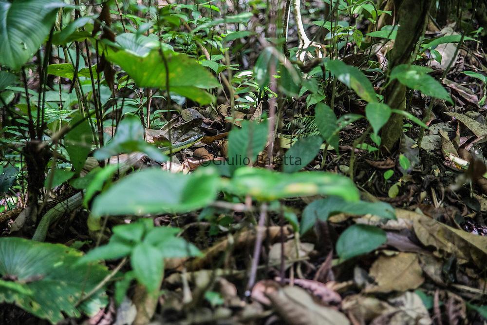A snake inside the forest surrounding Finca Bellavista