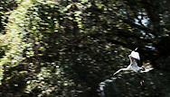 Wood Stork, Garden of Earthly Delights, Sarasota, Florida