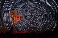4月1日,在美国洛杉矶以东的约书亚树国家公园,摄影师用叠加法拍摄的星轨。。新华社发 (赵汉荣摄)<br /> Star trails are seen above the Joshua Tree National Park in Twentynine Palms, California, the United States, April 1, 2016. (Xinhua/Zhao Hanrong)<br /> (Photo by Ringo Chiu/PHOTOFORMULA.com)<br /> <br /> Usage Notes: This content is intended for editorial use only. For other uses, additional clearances may be required.