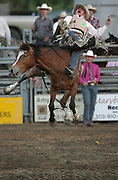 061408-Evergreen, CO-barebackriding-Bareback rider Craig Wisehart gets airborne during the bareback riding competition Saturday, June 14, 2008 at the Evergreen Rodeo Grounds..Photo By Matthew Jonas/Evergreen Newspapers/Photo Editor