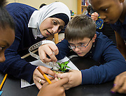 Students science lab at Walnut Bend Elementary school, February 6, 2013.