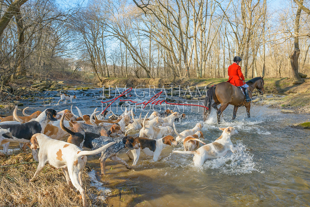 Ivan Dowling leads hounds across the Doe Run near Coatesville, Pa Thursday 14 Jan 2016.  Photo by Jim Graham
