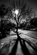Black & White of barren tree branches and long cast shadows
