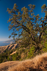 Plaskett Ridge, Los Padres National Forest, Big Sur, California, US