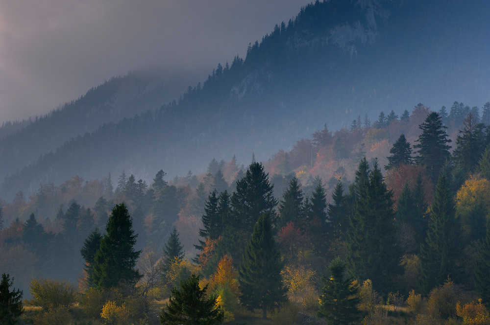 Forest at Rock of the King, National Park Piatra Craiului, Transylvania, Southern Carpathians, Romania
