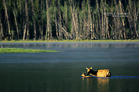Elk cow and calf, Vermilion Lakes, Banff National Park, Alberta, Canada