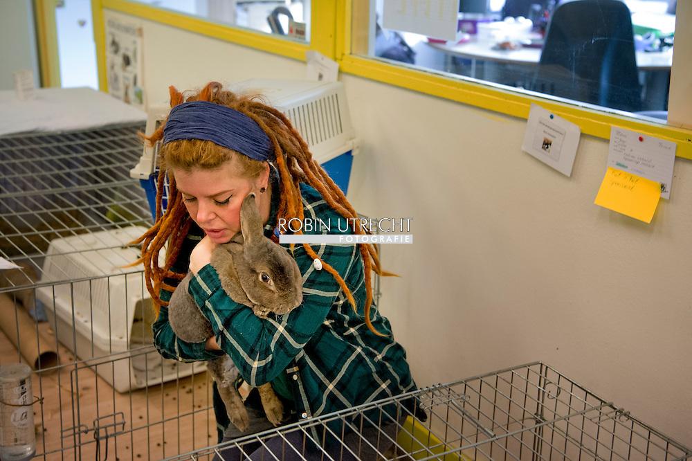 rijswijk - Het Knaaghof is een konijnen- en knaagdierenopvangcentrum in Rijswijk. Het centrum vangt jaarlijks zo'n 500 dieren op. Dit is steeds vaker nodig, omdat veel konijnen en knaagdieren in een impuls worden gekocht. Als een dier binnen- komt wordt het onderzocht door de dierenarts. Het Knaaghof beschikt over een quarantaine-afdeling en een zieken- boeg om te voorkomen dat ziektes in de opvang verspreid worden. In Het Knaaghof krijgen de dieren alle verzorging en aandacht die ze nodig hebben. Ook zijn er speelvelden, zodat ze met hun soortgenoten kunnen spelen. De beheerders staan samen met de vrijwilligers en stagiaires klaar voor de dieren. Professionaliteit staat hoog in het vaandel en het dierenwelzijn staat altijd voorop. Het Knaaghof streeft er naar om zo snel mogelijk een goed thuis te vinden voor alle dieren, waar ze de verzorging, ruimte en aandacht krijgen die ze nodig hebben. copyright robin utrecht