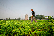 Farmer Han Fangyun walks through a field of carrots in this 2007 image. He believes his neighbor, a giant coal fired power plant, is to blame. After the plant came, pollenation of his fruit trees and corn fields failed. Linfen is one of the most polluted areas in the world.<br /> For years, China has resisted any outside pressure to curb their greenhouse gas emissions, citing their need and right to develop their economy. USA and China are the biggest carbon polluters in the world, and with both nations absent from international climate agreements, earlier climate negotiations have ended in toothless compromises.<br /> That could change with the COP21 Climate Conference in Paris. Already in December last year, both China and USA announced joint commitment to reduce emissions and increase renewable energy to 20 percent by 2030. China already has a substantial carbon trading system in place, second only to EU, and today (Sep 25th 2015) President Xi Jinping of China announced how their cap-and-trade system can help to halt their growth of emissions by 2030. <br /> Speaking to Rolling Stone Magazine one year ago, Dan Dudeck (VP of the Environmental Defense  Fund) said &quot;If China is successful in using market forces to cap carbon and transform its economy, that may be the best shot we have to limit climate change.&quot;