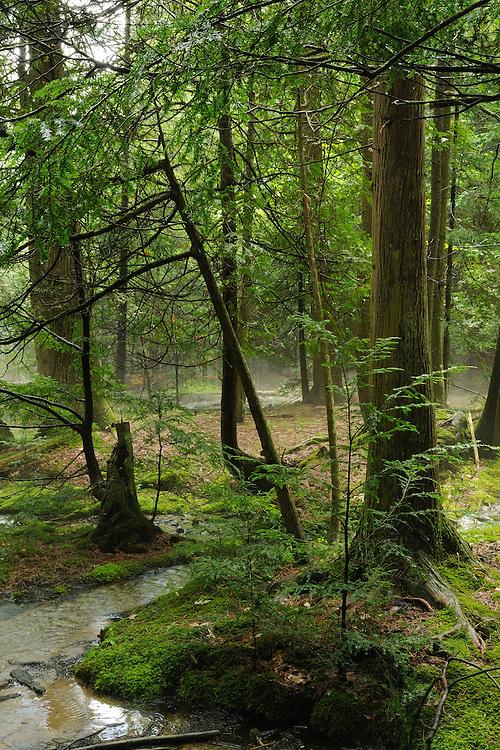 Huron National Forest,<br /> Northeast Lower Peninsula, Michigan