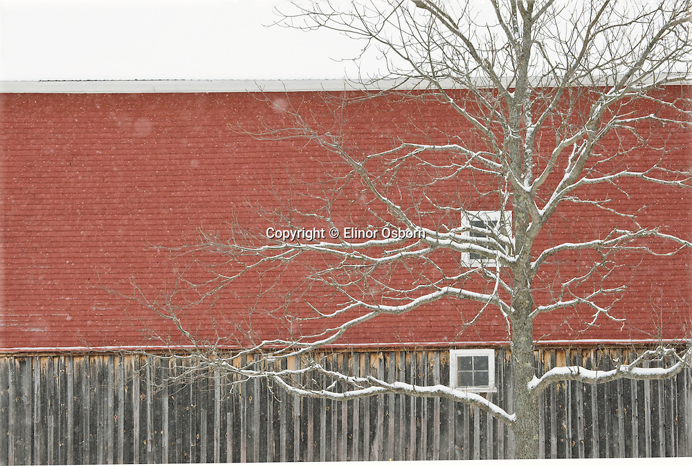 snowing, red barn
