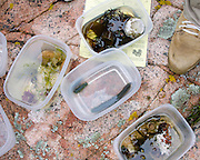 Specimens collected from tidepools on a marine biology field trip, Acadia National Park, Maine