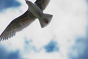 A gull flies overhead