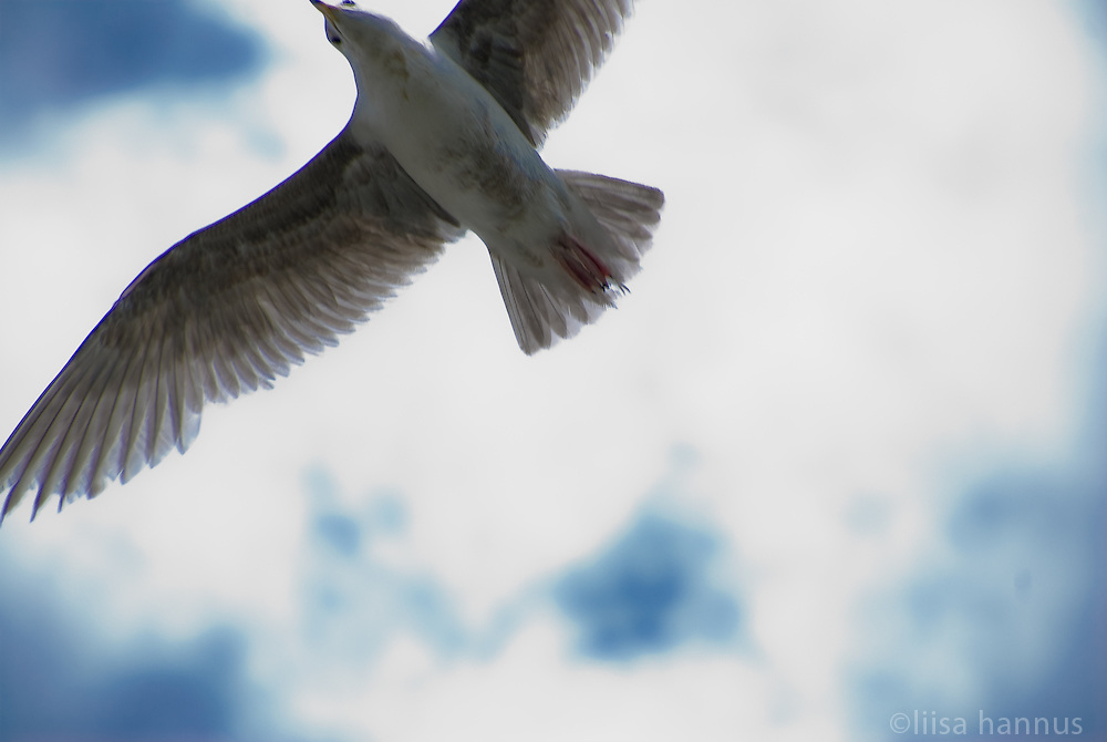 A gull flies overhead