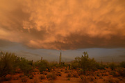 Sunset, Sonoran Desert, as seen from south of Sells, Arizona, USA, on the Tohono O'odham Reservation.